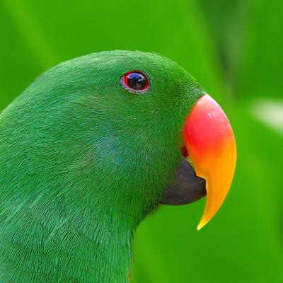 green11.jpg