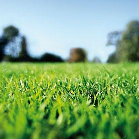 green_grass2.jpg