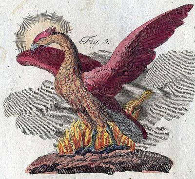 phoenix5.jpg