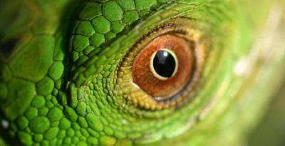reptil1.jpg