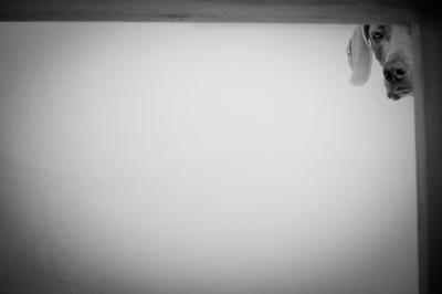 whitespace51.jpg